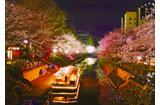 桜 親鸞会