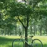 森の中と自転車